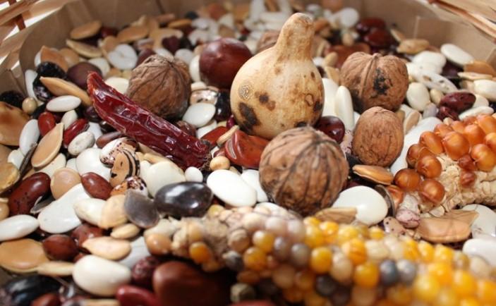 foro jurídico privaización de las semillas